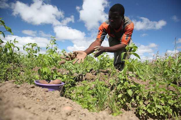agricoltura sociale normativa