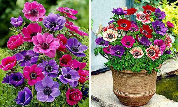bulbi fioritura primaverile