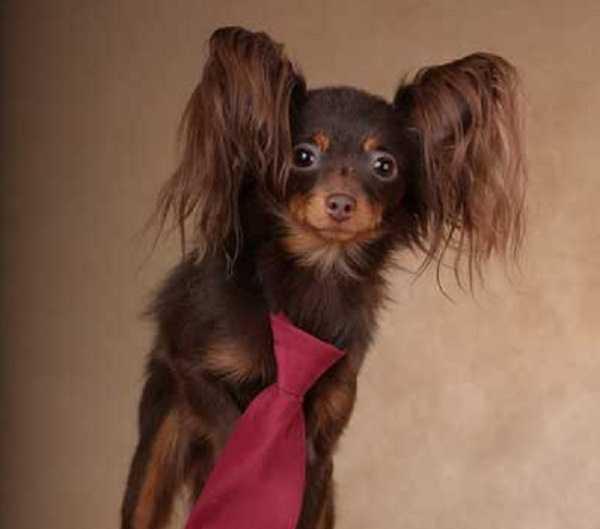 Cani da appartamento di piccola taglia - Idee Green