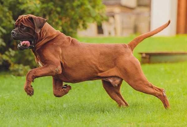 Cani Da Guardia Le Razze Migliori Best5 It Pictures to pin ...