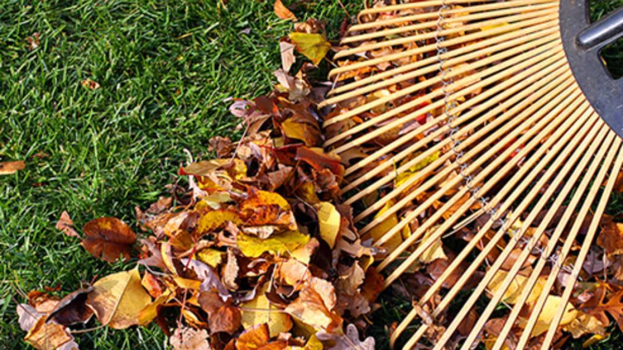 Concime Per Prato Autunnale cura del prato in autunno e inverno - idee green