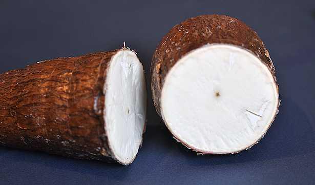 farina di manioca