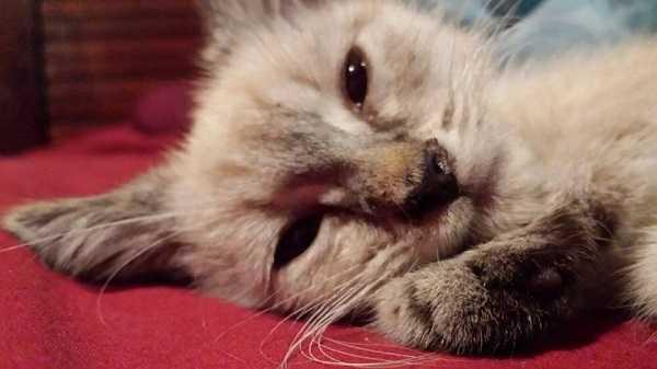 gatto anziano3