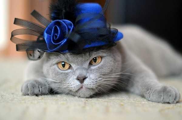 gatto anziano6