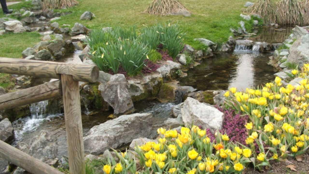Fiori Da Giardino In Montagna giardino roccioso, quali piante scegliere - idee green