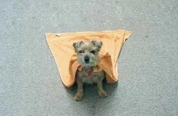 integratori cani2