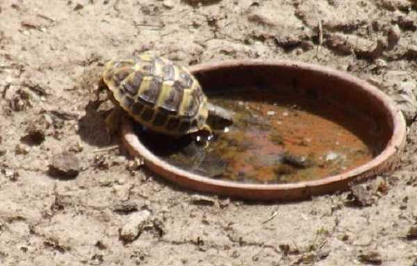 Letargo delle tartarughe come affrontarlo idee green for Stagno tartarughe