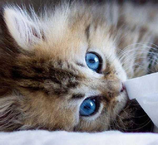malattie infettive gatti 1