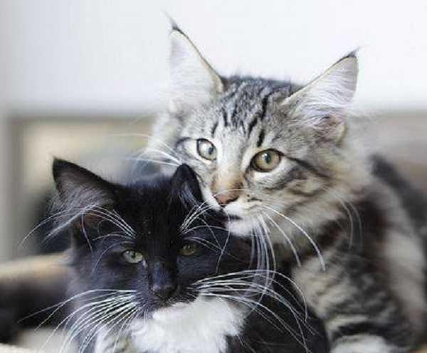 malattie infettive gatti 3