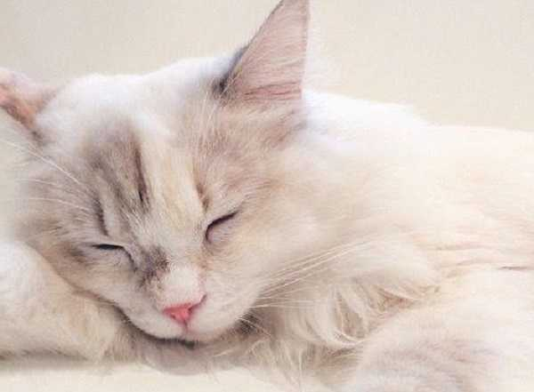 malattie infettive gatti 4