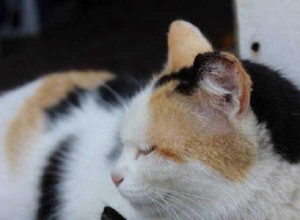 malattie infettive gatti 5