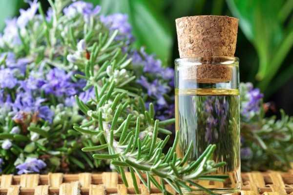 olio essenziale di rosmarino proprietà