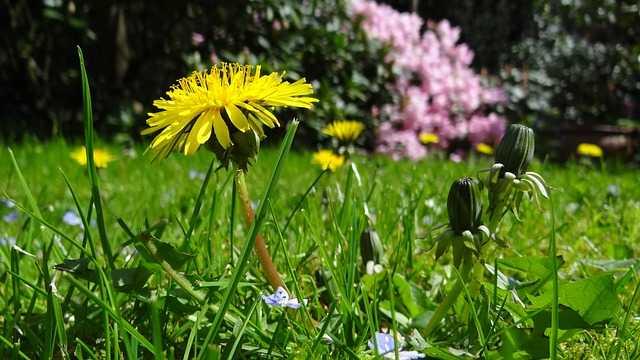 permacultura in giardino