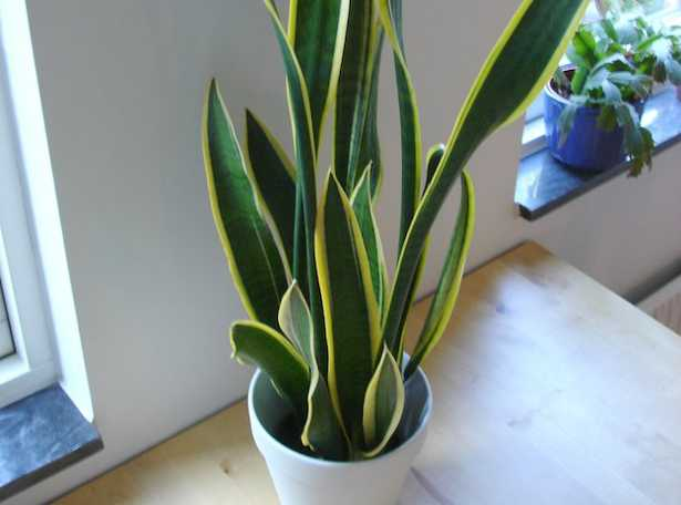 La salute delle piante da appartamento - Idee Green