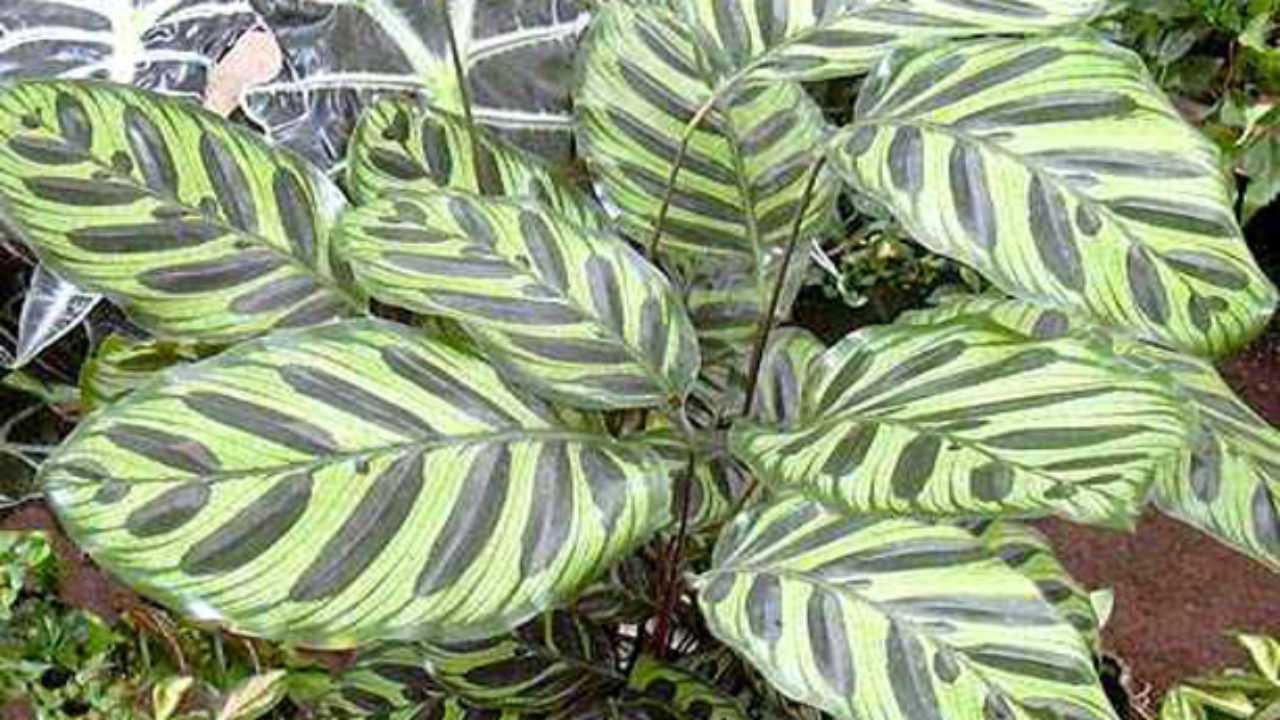 Piante Tropicali Da Interno piante da interno, regole base - idee green