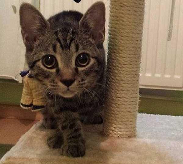 sterelizzazione gatto maschio2