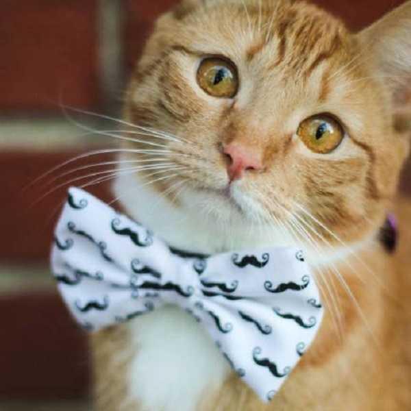 sterelizzazione gatto maschio3