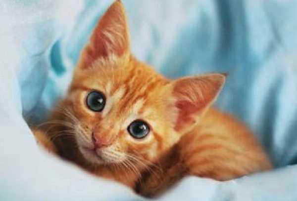 sterelizzazione gatto maschio4