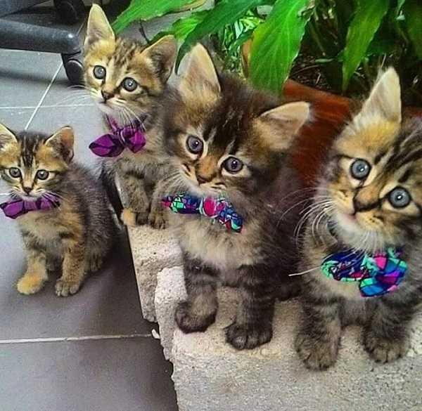 sterelizzazione gatto maschio5