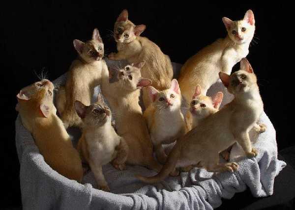 svezzamento gatti1