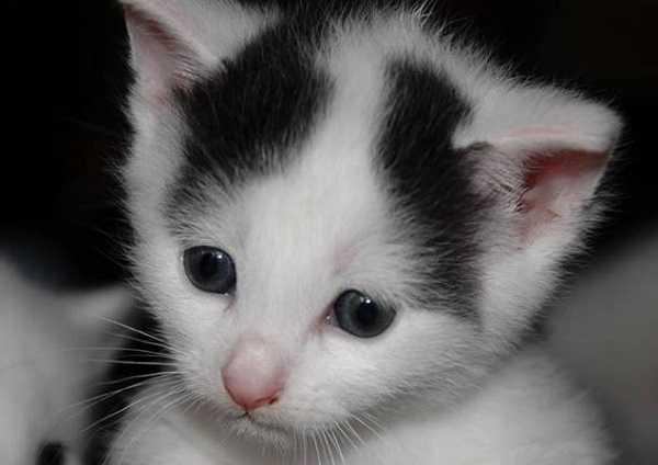 svezzamento gatti2