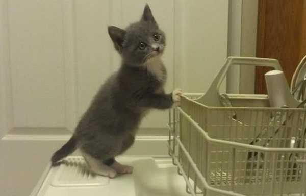 svezzamento gatti3