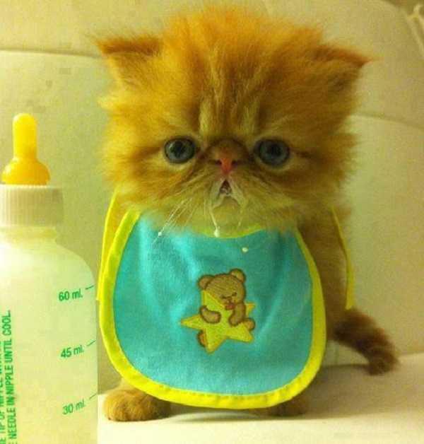 svezzamento gatti4