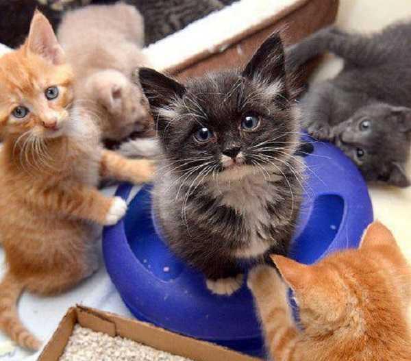 svezzamento gatti5