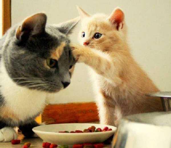 vitamine per gatti4