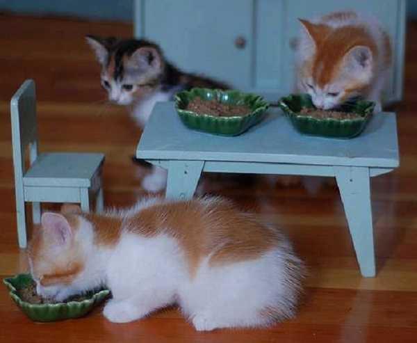 vitamine per gatti5