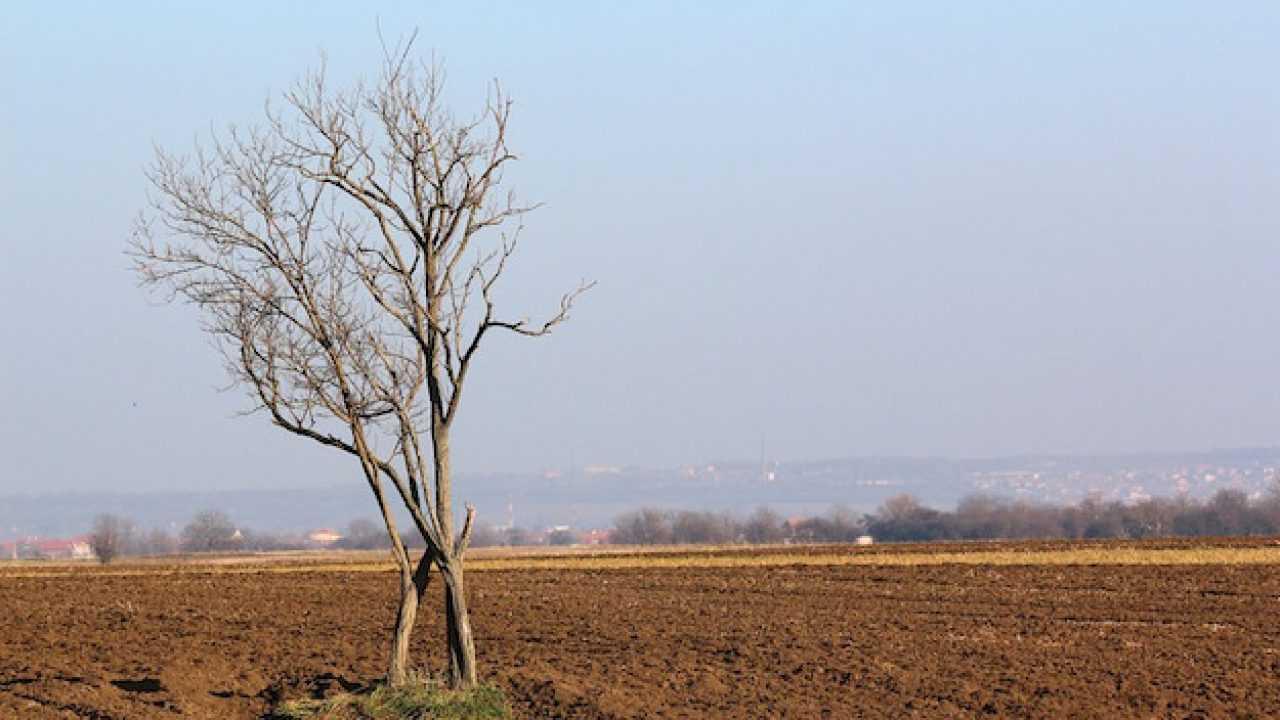 Proprietà Cenere Di Legna come aumentare il ph del terreno - idee green