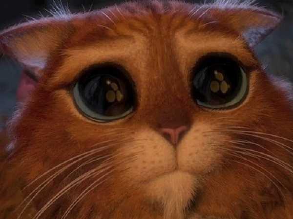 Cartoni animati con gatti: Gatto con gli Stivali