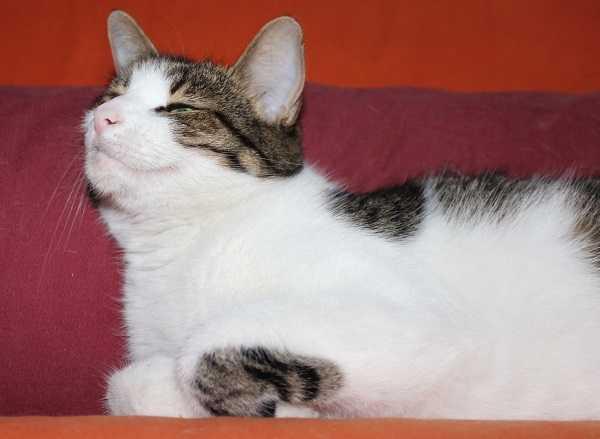 comportamento dei gatti