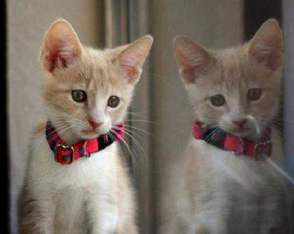 comportamento gatti gelosi