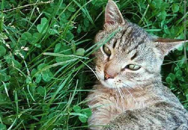 comportamento gatti offesi