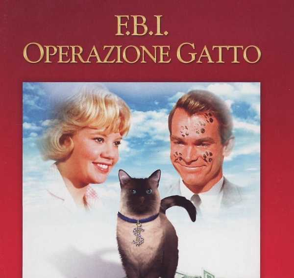 film con gatti2