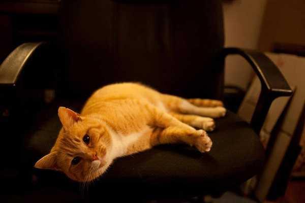 film con gatti5