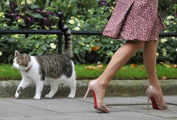 gatti famosi7