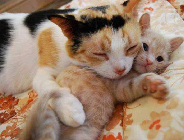 gatti in regalo 4