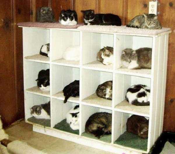 gatti in regalo 3
