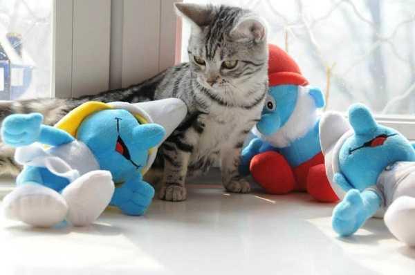 gatti in regalo 2