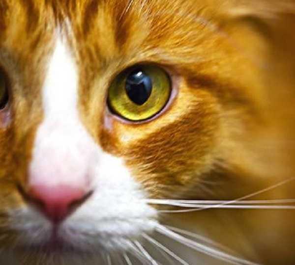 gatto cieco1