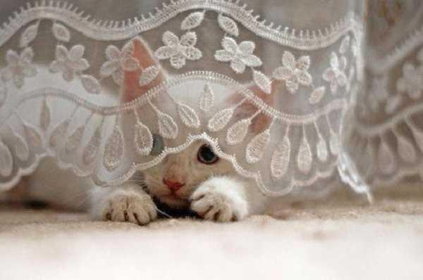 gatto cieco2