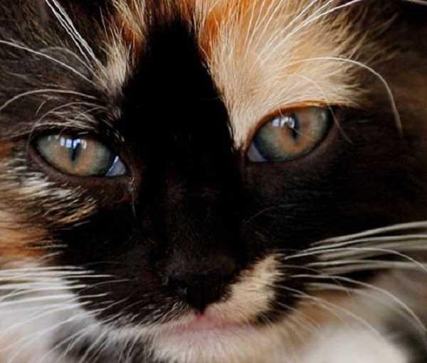 gatto cieco3