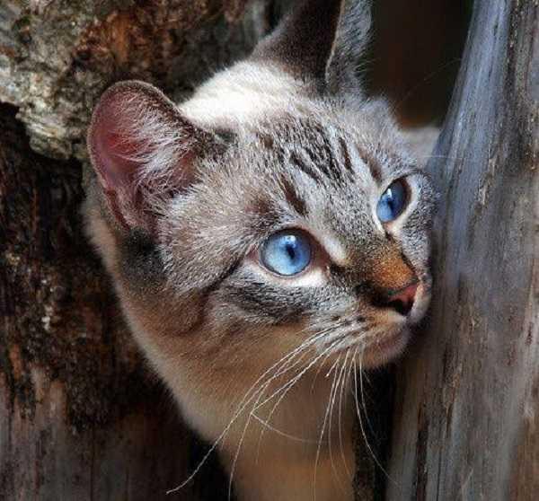 gatto cieco5