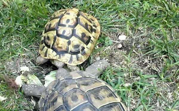 Animali domestici elenco completo idee green for Letargo tartarughe acqua