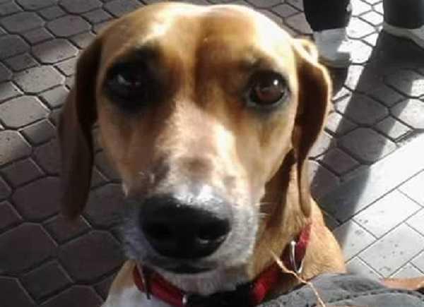 naso secco nel cane allergie