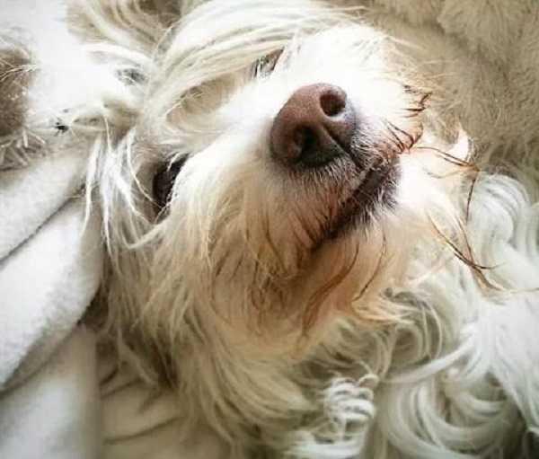naso secco nel cane non preoccuparsi