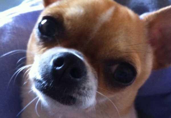 naso secco nel cane veterinario