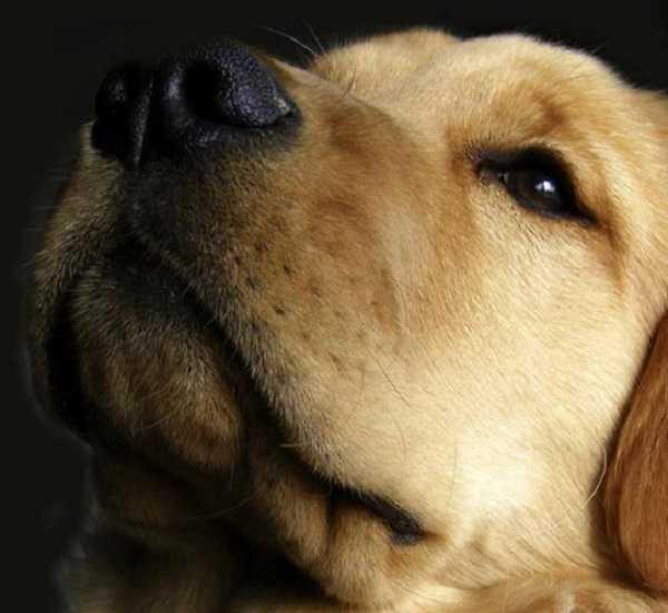 naso secco nel cane